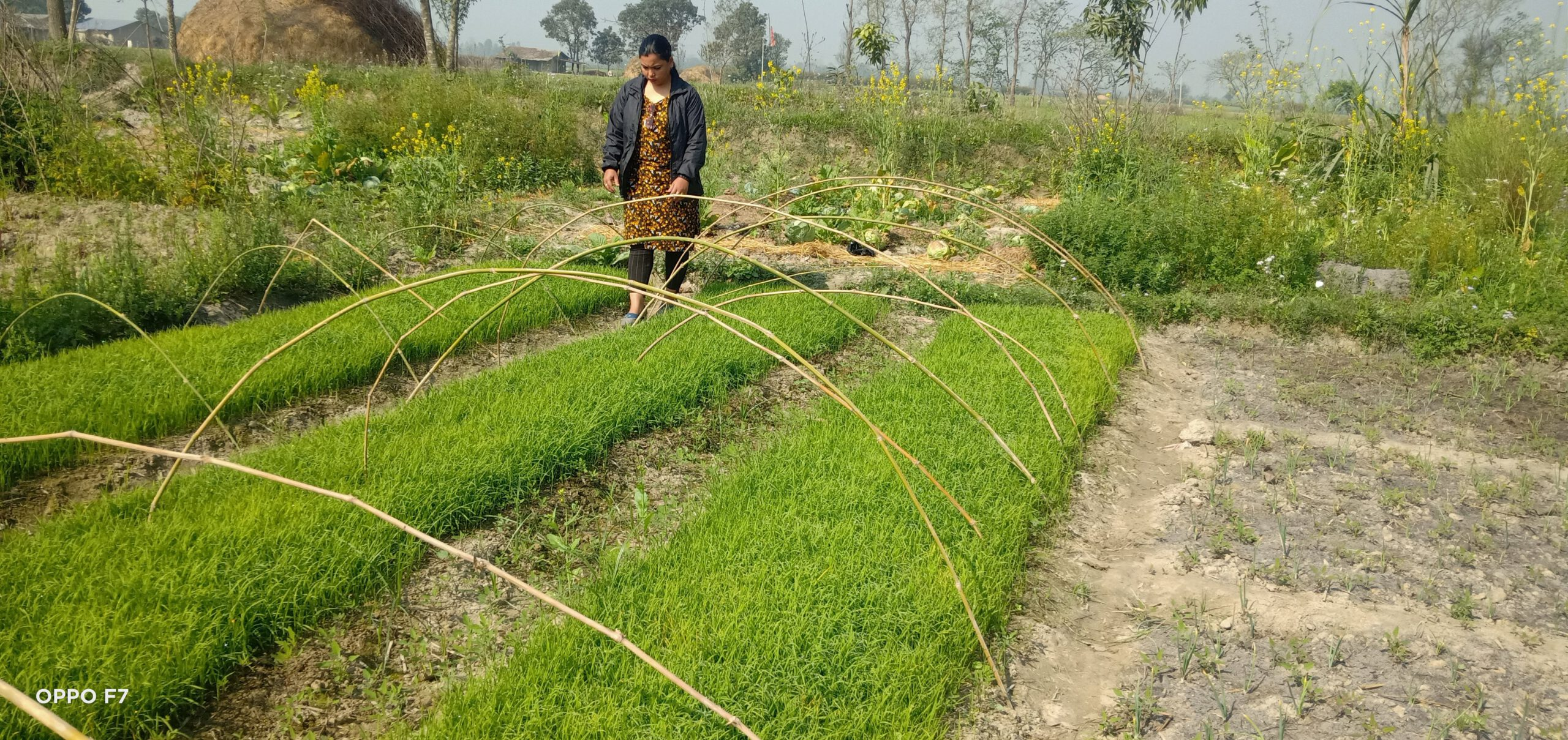 बेरोजगार युवालाई कृषिबाट आत्मनिर्भर बनाइँदै